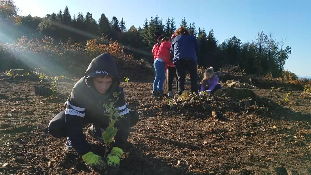 Primarschüler helfen in Oberrohrdorf 750 Eichen zu pflanzen