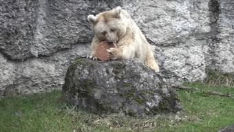 Braunbärin Fränzi stirbt im Tierpark mit 35 Jahren