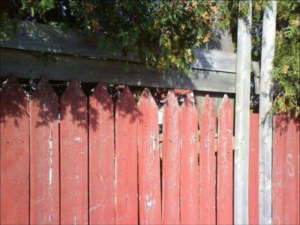 Hier versteckt sich eine Katze. Siehst du wo? (© Facebook/Suchbilder)
