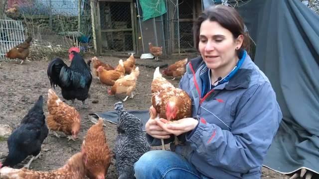 Martina Blattner erklärt den Gnadenhof in Kleinlützel: «Hier sollen Menschen den Tieren auf Augenhöhe begegnen»