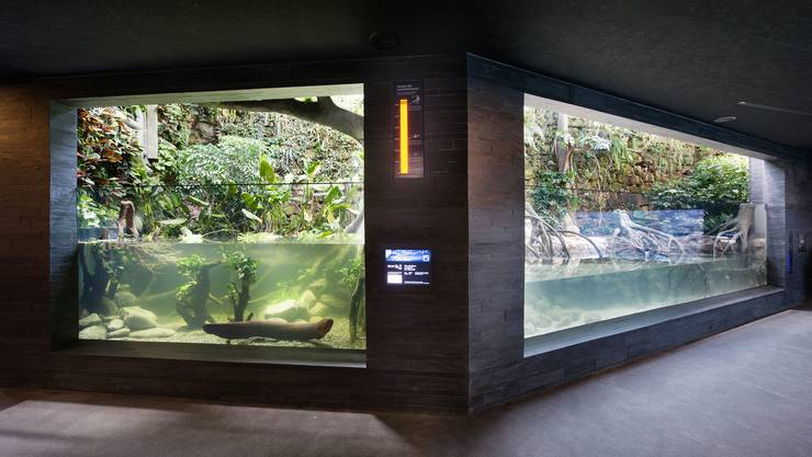 Zitteraal- (l.) und Gezeitenbecken. Im Aquarium des Zoos Zürich tummelt sich so einiges: