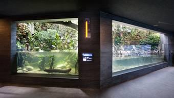 Zoo Zürich Aquarium