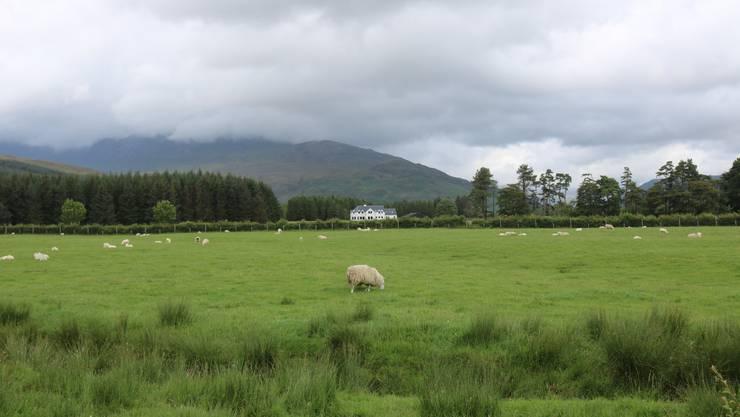 Hier werden Reisende vom typischen Highland-Geruch begrüsst. Bild: David Coulin