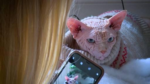 Tierliebe extrem: Sandra und ihre Nacktkatzen