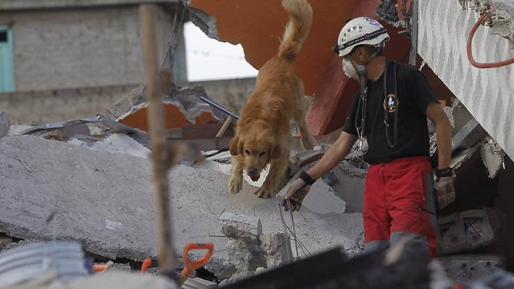 Spürhunde sind verlässliche Katastrophenhelfer. Doch sie brauchen Pausen und sind nicht immer so schnell verfügbar wie nötig. In Zukunft könnten sie Unterstützung von elektronischen Spürnasen erhalten, die die ETH-Zürich entwickelt hat. (Symbolbild)
