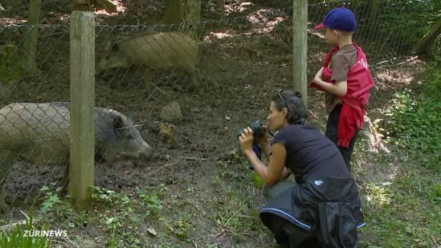 3 Wildschweine im Wildnispark Langenberg erschossen