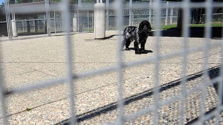 Hunde waren auch 2017 am häufigsten von Tierschutz-Strafverfahren betroffen. (Symbolbild)