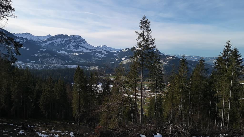 Wald-Korporationen am Anschlag