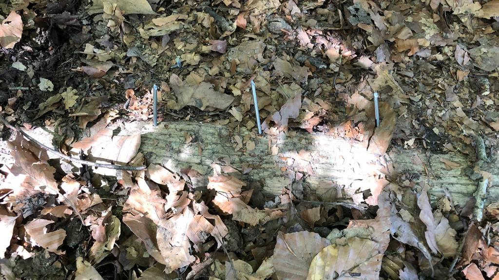 Diese Nagelfalle wurde auf dem Waldweg gefunden.