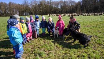 Die Kindergärtler aus Kallern singen Schäfer Fabrizio, seinen Schafen und seinen Hunden ein Schäferlied. Er freut sich sichtlich – genauso wie auf das Ende seiner Wintersaison im Aargau.