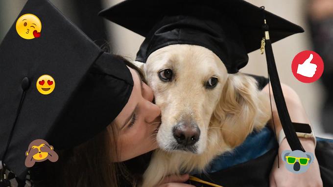 Hund erhält Uni-Abschluss, weil er seinem Frauchen im Rollstuhl durchs Studium half