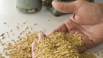 Eine handvoll Reis wird untersucht (Symbolbild)