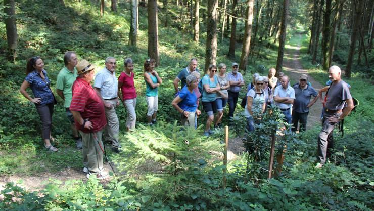 Exkursionsleiter Roland Keller (rechts aussen) erzählt die Geschichte des vom Windfall beschädigten Lorbeer-Seidelbasts