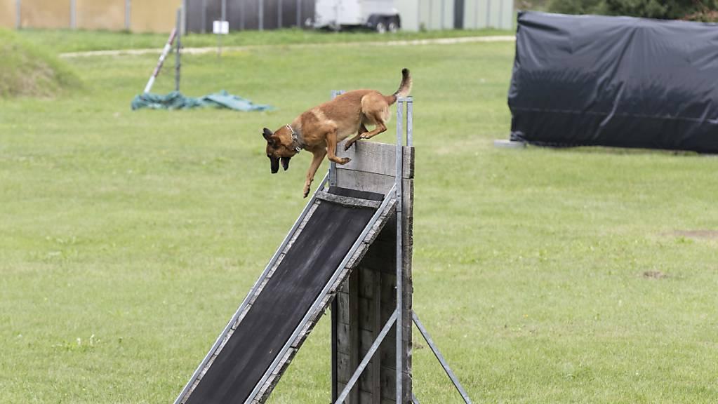 Im Österreichischen Bundesheer sind derzeit 70 Militärhunde im Einsatz.(Symbolbild)