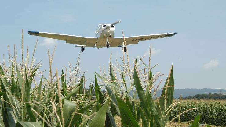 Landung übers Maisfeld auf dem Flugplatz Birrfeld
