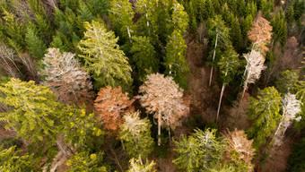 Abgestorbene Bäume sind Folgen des Klimawandels. (Archivbild)