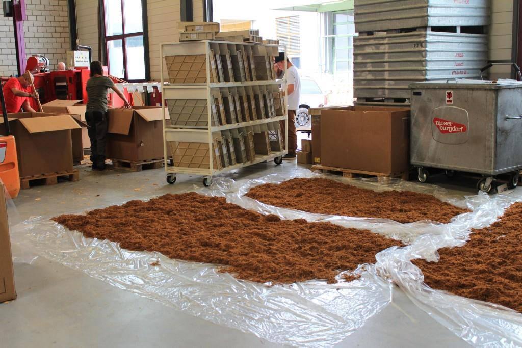 Der Tabak wird zum Trocknen ausgelegt. (© FM1Today/Lara Abderhalden)