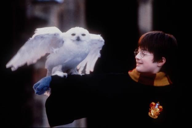 Harry Potter mit seiner Schneeeule Hedwig.