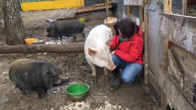 Martina Blattner schaut mit viel Liebe zu den Tieren auf dem Gnadenhof in Kleinlützel – mit Futter lassen sie sich nicht zweimal bitten