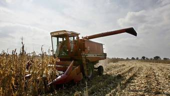 Mais und andere Agrarrohstoffe werden immer teurer (Archiv)