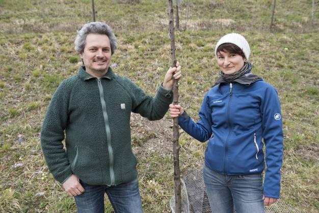 Pflanzen gemeinsam ihren Baum: Petra Rutschmann, Einwohnerrätin Obersiggenthal und Christian Keller, Einwohnerratspräsident und Präsident der Grünen Obersiggenthal . «Ich finde es sinnvoll, mich an der Aktion zu beteiligen. Es ist eine ökologische Aufwertung und dazu noch eine gemeinschaftliche Arbeit», sagt Keller.
