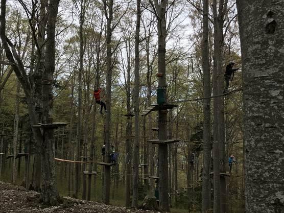 Wald voller Affen