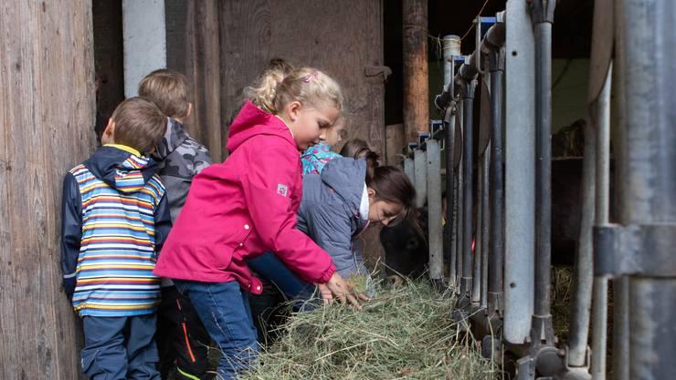 Die hungrigen Kälber warteten ungeduldig auf die kleinen Helfer: Diese putzten zuerst die Futtertröge und füllten sie dann mit frischem Stroh auf.