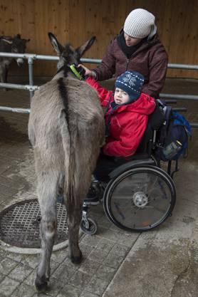 Obwohl Nico im Rollstuhl sitzt, hilft er beim Putzen und Satteln mit.