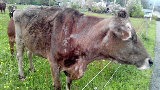 Nach Tierdrama: Tierhalteverbot für Bauer