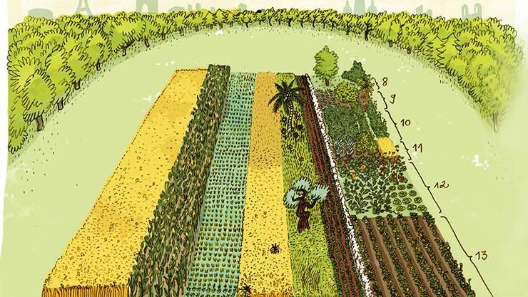 1: Weizen 2: Mais 3: Reis 4: sonstige Getreide 5: ölhaltige Pflanzen 6: Soja 7: Baumwolle 8: Nüsse 9: Obst 10: Hülsenfrüchte 11: Faserproduktion 12: Gemüse 13: Kartoffeln u. ä. Illustration: Annika  Huskamp für die Zukunftstiftung Landwirtschaft.