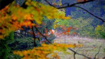 Bewegt sich da etwas am Waldrand? Es ist doch nur ein Treiber mit seinem Hund.