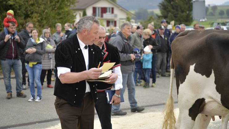 Die besten Kühe jeder der acht Klassen werden nochmals in den Ring gebracht und von den beiden Viehschauexperten Werner Walter (Jacke mit rotem Saum) aus Riedholz und Res Brügger aus Erlenbach im Simmental beurteilt.