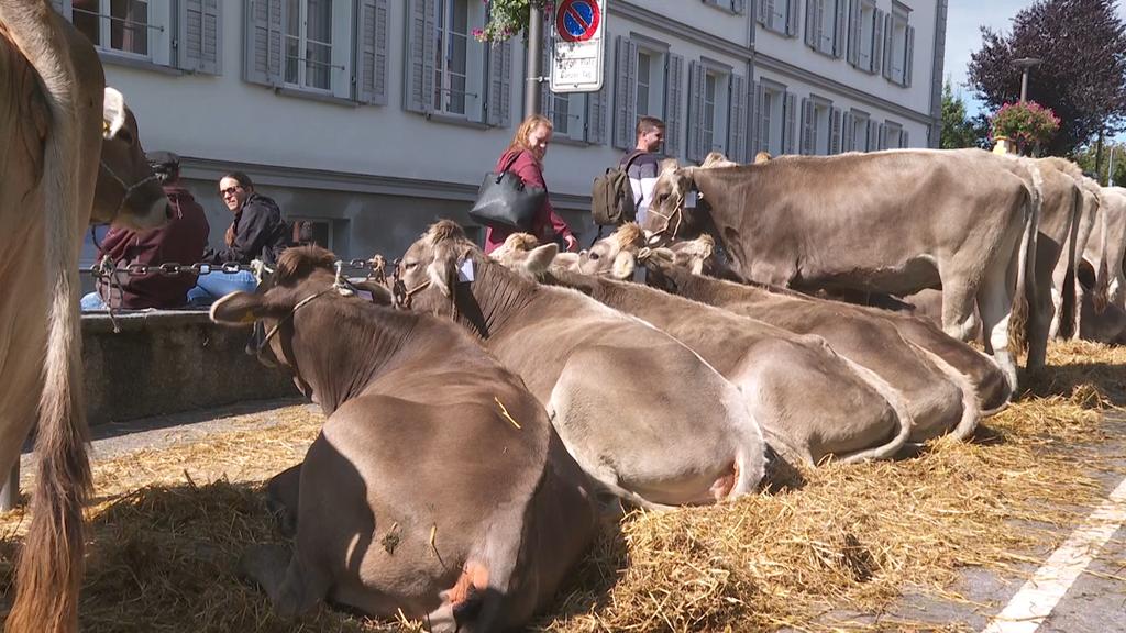 Viehschau in Herisau: «Wichtig, dass wir sie durchführen können»