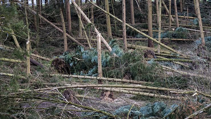"""Die Schweizer Wälder wurden durch den Sturm """"Burglind"""" teilweise arg in Mitleidenschaft gezogen, wie dieses Waldstück bei Kestenholz SO zeigt."""