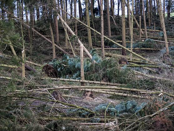 Das Waldstück bei Kestenholz wurde durch den Sturm «Burglind» arg in Mitleidenschaft gezogen.