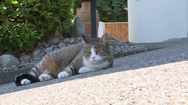 Mysteriöses Katzen-Verschwinden im Seeland