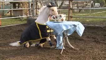 Das Pony Suleika beim Teetrinken