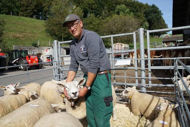 Toni Rüttimann mit seinen Texel-Schafen.