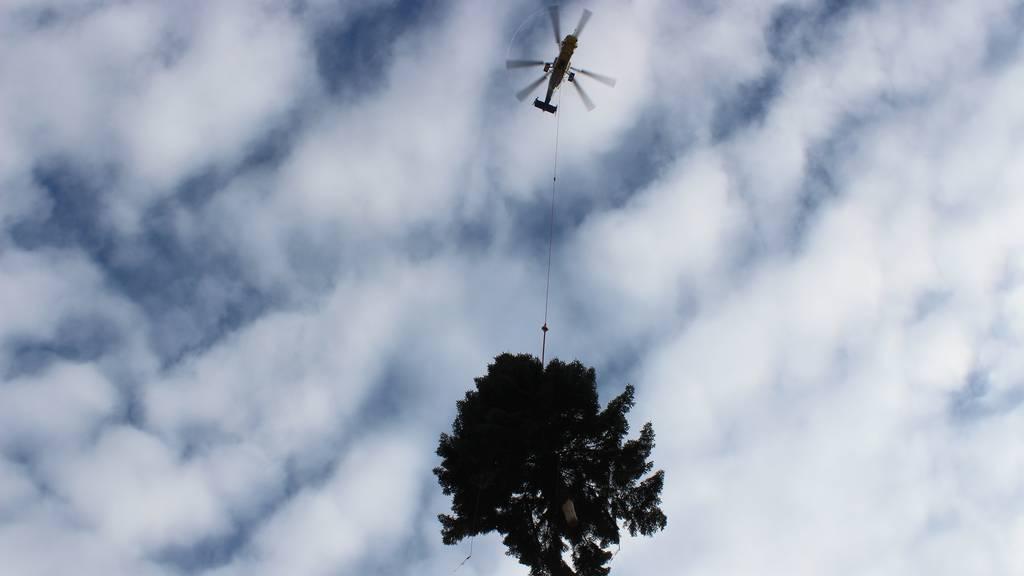 Der Christbaum kommt geflogen