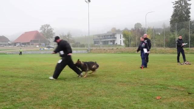 Polizeihundeprüfung