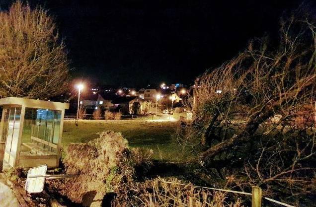 In Unterlengnau im Bezirk Zurzach hat Sturm Bianca einen Baum entwurzelt.