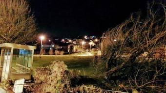 Schäden durch Sturm Bianca im Aargau (27./28.02.2020)