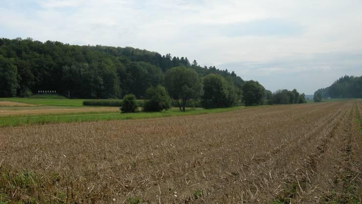 Der Biberenbach zwischen Bibern und Ichertswil.