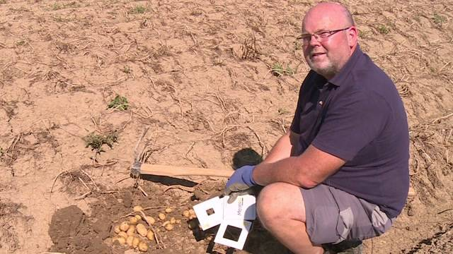 Wetter und Vorschriften vermiesen Kartoffelernte