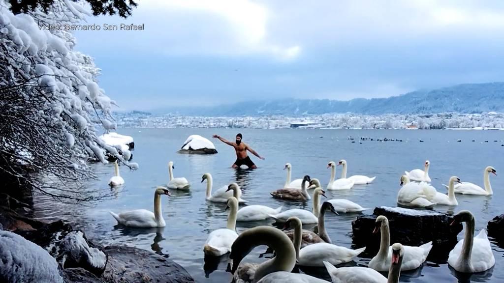 Schwanentanz im Zürichsee