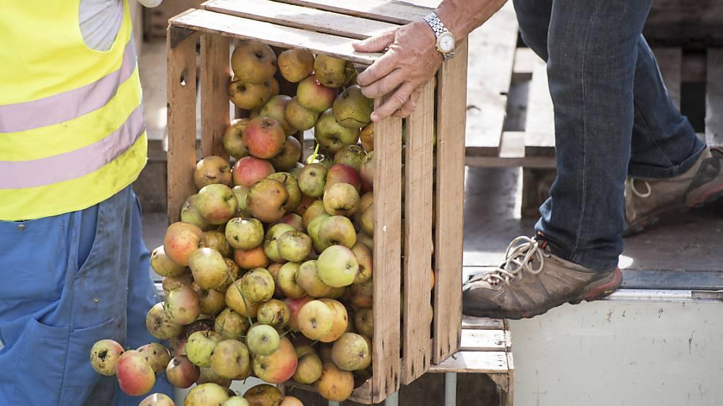 2021 gibt es wenig Most: Anlieferung von Mostäpfeln in der Mosterei Sursee des Getränkeherstellers Ramseier. (Archivbild)