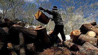Das La Pimienta-Grundstück von Precious Woods in Nicaragua