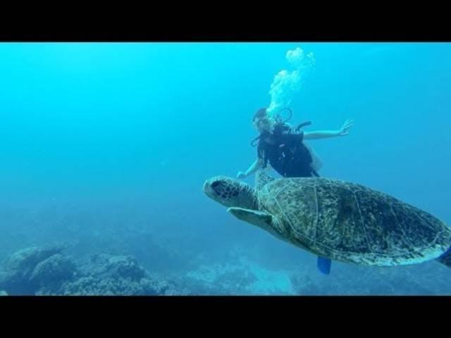 Bunte Fische, bizarre Korallen: Tauchen mit der Go-Pro-Kamera im Great Barrier Reef.