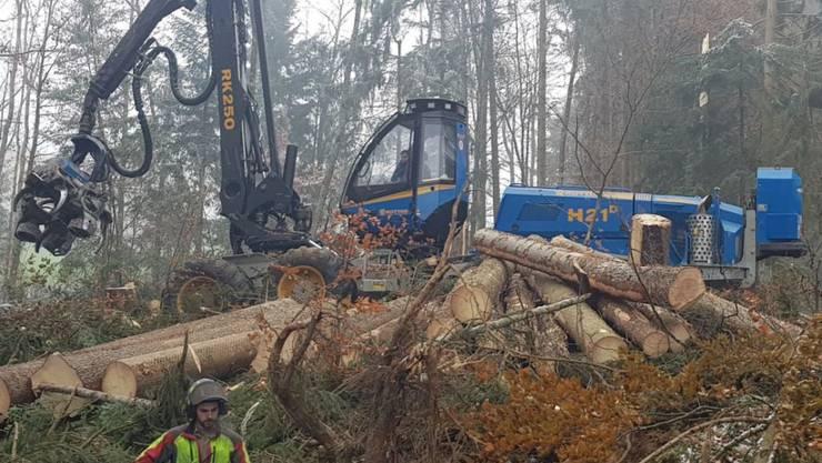 """Aufräumarbeiten im Schluchwald bei Stein AR. Der Sturm """"Vaia"""" hat in den Wäldern Appenzell Ausserrhodens Ende Oktober grosse Schäden verursacht"""