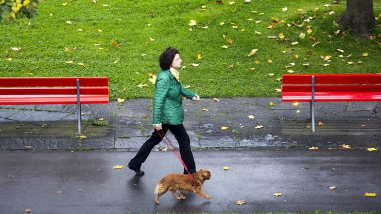 Der Hund sollte beim Spaziergang an der Leine sein (Themenbild).